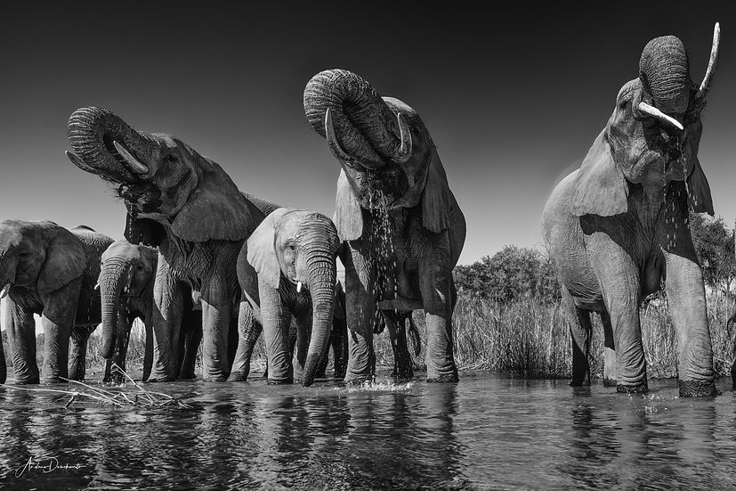 Andrew Dankwerts | The Watering Hole