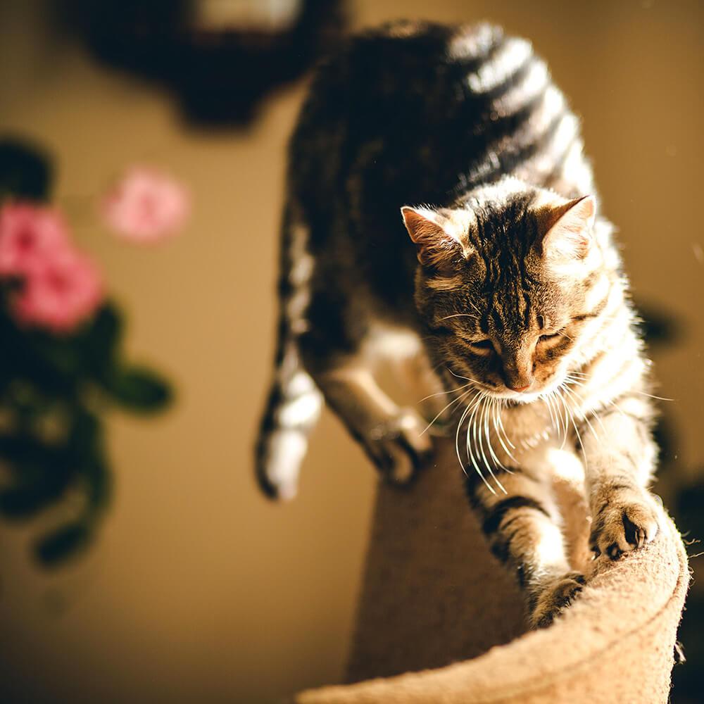 Chat faisant ses griffes sur un fauteuil