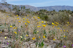Yucca Valley 2009_0261