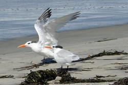 Carlsbad Beach - 9-14-07 026