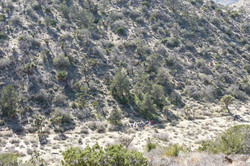 Yucca Valley 2009_0243