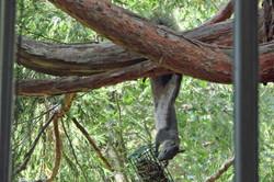 Squirrel - Idyllwild1 - 9-17-08 004