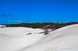 Dune-ride-6617
