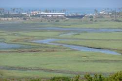 San Elijo Lagoon1 002_0206