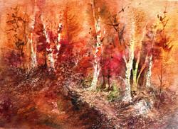 Autumn Birches - Susanne McGinnis