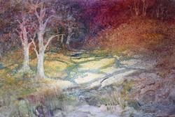 Autumn Woods - Susanne McGinnis