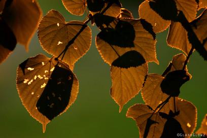Glowing Golden