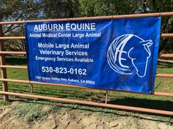 Auburn Equine