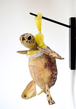 _T_ is for Turtle