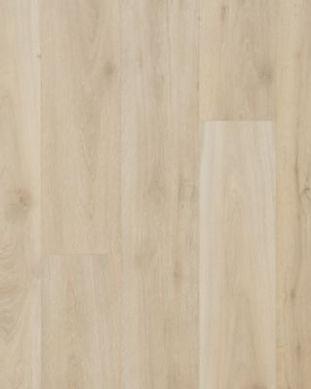 willow oak-leuco.jpg