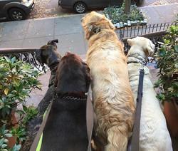Four cuties ready to get walking 👊🏼 Ta