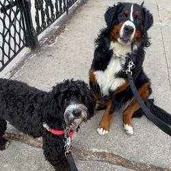 Izzie & Maya 😜 So glad to see each othe