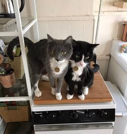 Fi & Oz #cat #catsofinstagram #catstagram #catstagram #brownstonecatpack #brownstonedogwalkers #broo