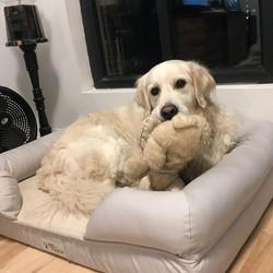 Wilson relaxing during a pet sit 🤗 #pet