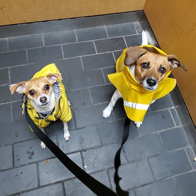 Lucy & Raleigh! Both so prepared for a w