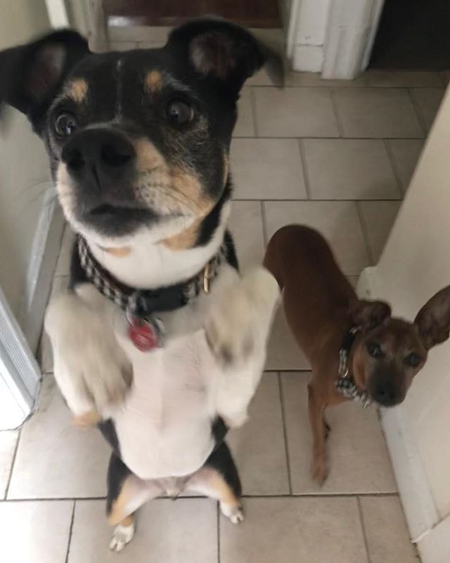 Toby and Bob waiting for their post walk
