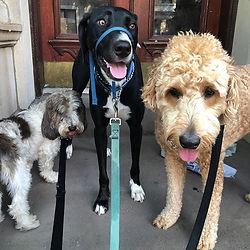 😋 The best boys!!! Basqui, Seamus & Abe