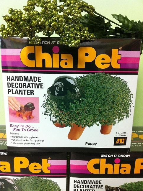 Chia Pets-SOLD OUT