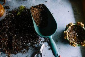 Planting Seeds of Faith