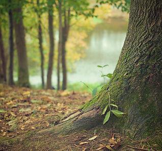 tree-trunk-569275_1920_edited.jpg