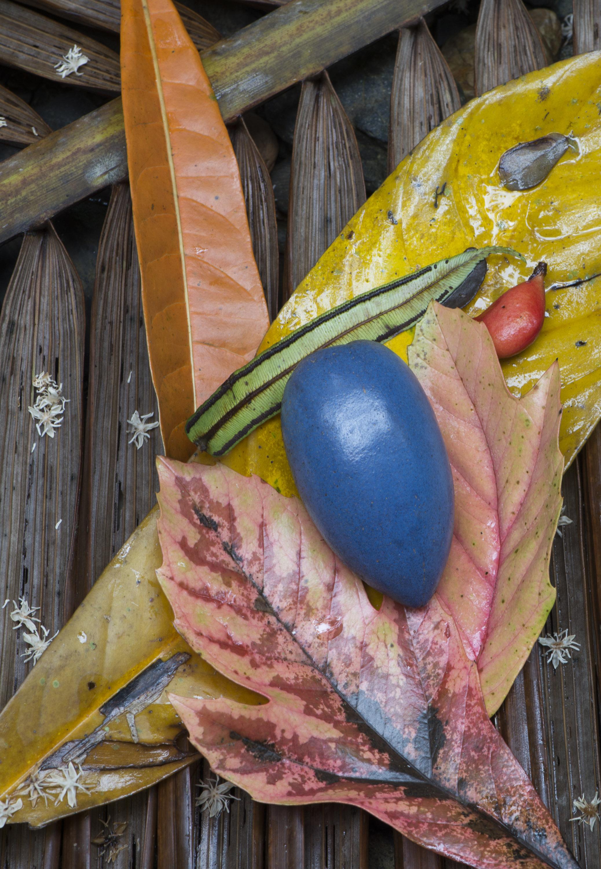 Fallen fruits