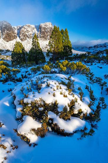 Prints | Wilderness | Winter Walls