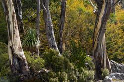 Mt. Field National Park