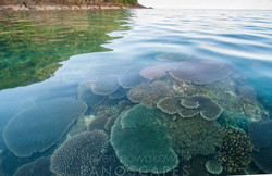 Kent Island - Barnard Island Group