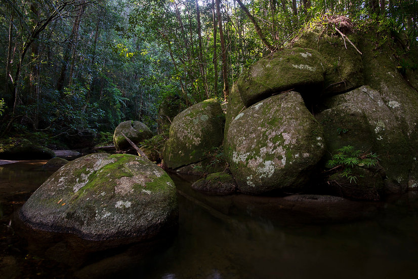 Prints | Rainforest | Boulder Land