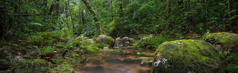 Prints | Rainforest | Cloud Forest