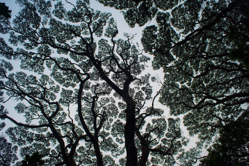 Prints | Rainforest | The Wooroonoorans # 1