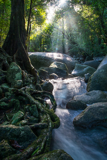 Prints | Rainforest | Morning rays over Fishery Creek