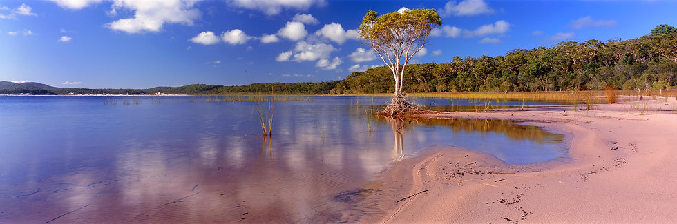 Prints | Wilderness | Lake Boomanjin, Fraser Island.
