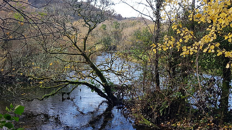 Pauline Bradley Woodland River 13.jpg