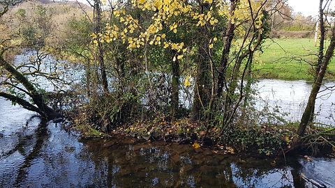 Pauline Bradley Woodland River 12.jpg