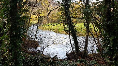 Pauline Bradley Woodland River 9.jpg