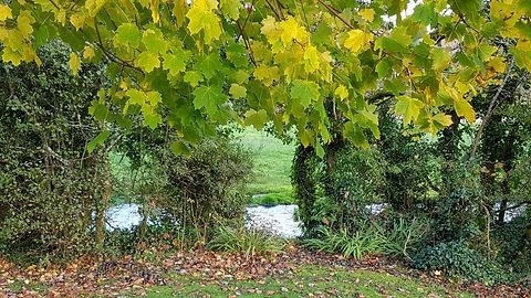 Pauline Bradley Woodland River 1.jpg