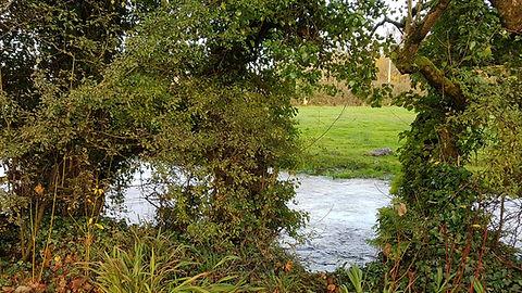 Pauline Bradley Woodland River 2.jpg