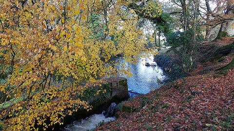 Pauline Bradley River View 16.jpg