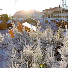 Sapins floqués marché de Noël