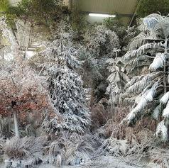 Forêt sous serre - Publicité Swarovski®