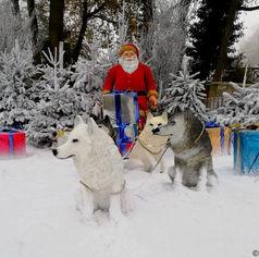 Traineau du Père Noël avec chiens dans la neige - Décor Pyrofolie's 2019
