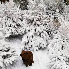 Marmotte dans la neige - Décor Pyrofolie's 2019