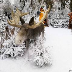 Elan dans la neige - Décor Pyrofolie's 2019