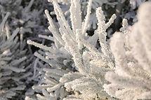 Sapins_floqués_Super_White_Snow.jpg