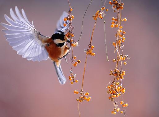 EARLY BIRD OFFER ON 200 HOUR YOGA TEACHER TRAINING