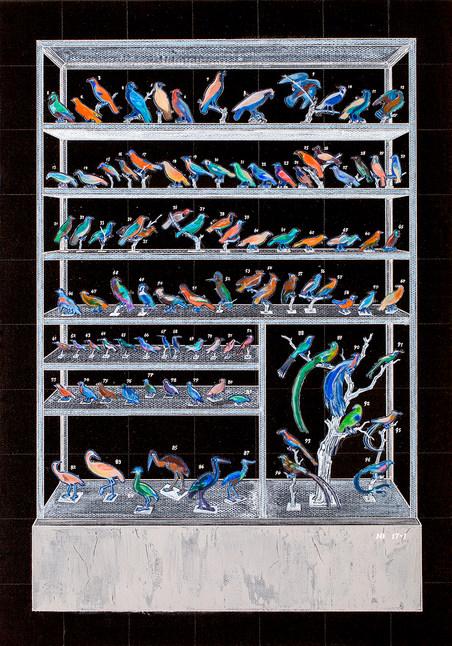 Specimen Cabinet in Negative Color