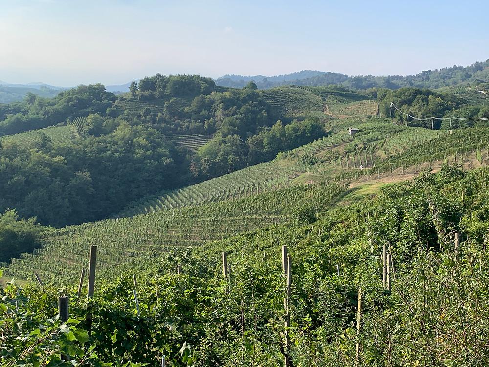 Gattinara, Piemonte