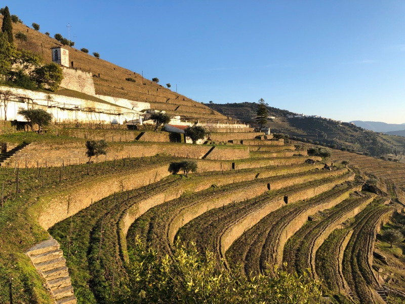 Quinta do Noval, Douro Valley, Portugal