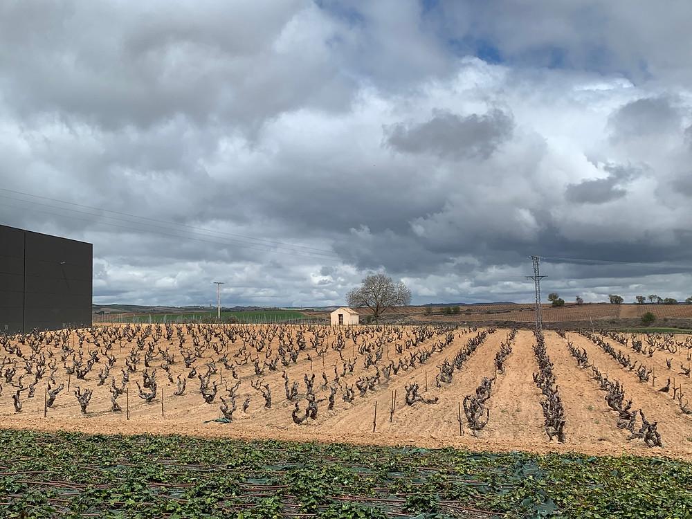 Pago de los Capellanes, Ribera del Duero